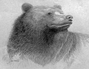 Forrest Drawings - Bear Alert by Rick Moore