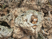 Disney Bear Photos - Bear Cave by Thomas Woolworth