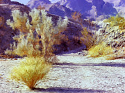 Dominic Piperata - Bear Creek Trail II
