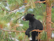 Bears Digital Art - Bear Cub in Tree 2 by Ernie Echols