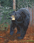 Marshall Bannister - Bear Path
