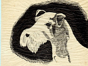Nature Study Drawings Prints - Bearded Dog Print by Joy Reese