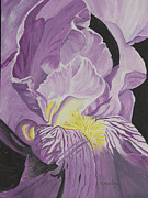 John Edebohls - Bearded Iris