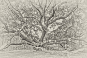 Bill LITTELL - Beaufort Oak in BW