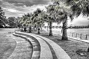 Palmetto Trees Framed Prints - Beaufort SC Water Front Park Framed Print by Scott Hansen