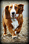 Sherri Robinson - Beauregard the Basset