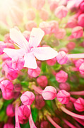 Mythja  Photography - Beautiful abstract floral background
