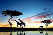 Beautiful  Animals In Safari Print by Boon Mee