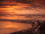 Dry Lake Prints - Beautiful atmospheric sunset scenery of driftwood on lake shore Print by Oleksiy Maksymenko