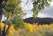 Yellow Trees Photos - Beautiful Autumn Landscape  by Ann Powell