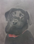 Retrievers Drawings - Beautiful Bear by Inge Lewis