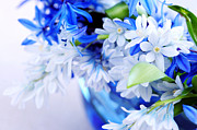 Online Flower Shop Prints - Beautiful  Blue Flower Print by Boon Mee