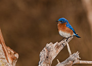 Dave Weth - Beautiful Bluebird