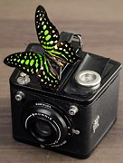 Camera Prints - Beautiful Butterfly on a Kodak Brownie Camera Print by Edward Fielding