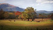 Tennessee Hay Bales Prints - Beautiful Cades Cove Print by Lena Auxier