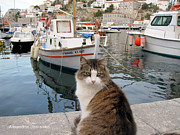 Hydra - Beautiful Cat in Hydra by Alexandros Daskalakis