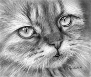 Graphite Portrait Drawings Prints - Beautiful Cat Print by Olga Shvartsur