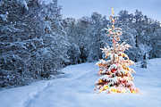 Colorful Photos Pyrography Posters - Beautiful christmas tree in snow Poster by Boon Mee