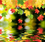 Johann Baptist Hofner Art - Beautiful Colorful Leaves by Boon Mee