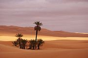 Africa Art - Beautiful desert by Ivan Slosar
