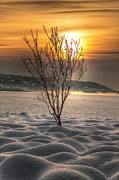 Thomas Berger Metal Prints - Beautiful evening 2 Metal Print by Thomas Berger