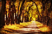Gravel Road Photo Metal Prints - Beautiful Fall Day in Nebraska Metal Print by Julie Hamilton