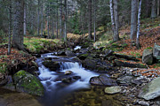 Ivan Slosar - Beautiful forest stream