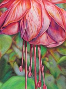 Fuschia Drawings Posters - Beautiful Fuschia Poster by Karina Griffiths