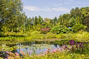 Patricia Hofmeester - Beautiful garden