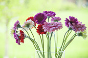 Patricia Hofmeester - Beautiful gerbera daisies in a vase