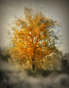 Karyn Robinson Metal Prints - Beautiful Golden Tree Metal Print by Karyn Robinson