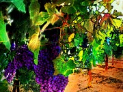 Grape Vineyards Prints - Beautiful Grape Vine Print by Cindy Edwards