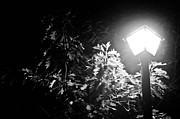 Park Scene Pyrography Metal Prints - Beautiful lamp light in the dark Metal Print by Fatemeh Azadbakht