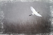 Egret Photo Prints - Beautiful Life Print by Rebecca Cozart