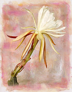 Robert Jensen Art - Beautiful Morning epiphyllum bloom by Robert Jensen