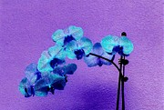Beautiful Orchids Print by Annie Zeno