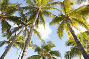 Featured Metal Prints - Beautiful Palms Metal Print by Brandon Tabiolo