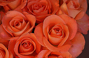 Abstract Roses Posters - Beautiful peach roses 2 Poster by Carol Lynch