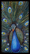 Amanda  Ferrell-Hale - Beautiful Peacock