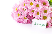Free Flower Delivery Prints - Beautiful Pink Chrysanthemums Print by Boon Mee