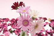 Pastel Pyrography - Beautiful Pink Gerbera by Boon Mee