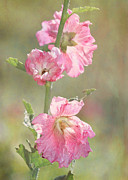 Amazing Posters - Beautiful Pink Hollyhock Flowers Poster by Sabrina L Ryan