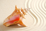 Sea Shell Art Pyrography Prints - Beautiful sea shell Print by Boon Mee