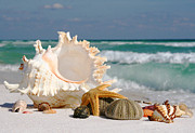 Clock Pyrography Posters - Beautiful Sea Shell on Sand Poster by Boon Mee