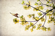 Floral Hummingbird Posters - Beautiful Spring Poster by Darren Fisher