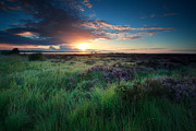 Early Morning Sun Photos - Beautiful Sunrise Over Marsh With Blooming Heather by Olha Rohulya