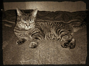 Sepia And Cream Posters - Beautiful Tabby Cat Poster by Absinthe Art  By Michelle Scott