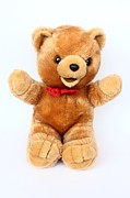 Borislav Marinic - Beautiful teddy-bear