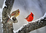 Red Cardinals In Snow Prints - Beautiful Together Print by Nava Jo Thompson