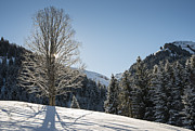 Backlit Prints - Beautiful tree in snowy landscape on a sunny winter day Print by Matthias Hauser